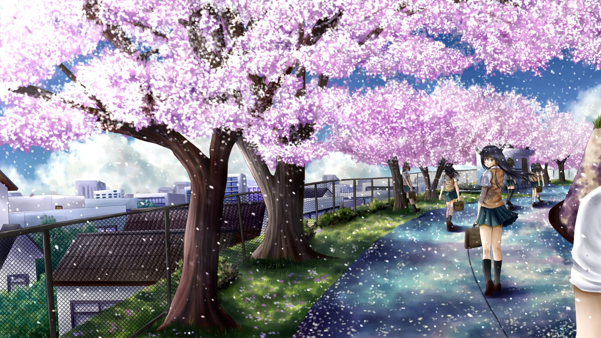 Cherry Blossom Wallpaper Anime - impremedia.net