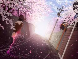 cherry blossoms, goke shi…