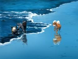 animal, beach, cosmo pixi…