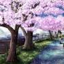 cherry blossoms, ilolamai…
